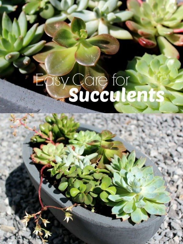 How to Care for Succulents Outdoors - Satori Design for Living
