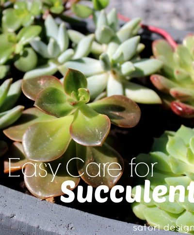 Caring for Outdoor Succulents - Satori Design for Living