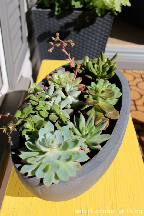 How to Care for Succulents in Pots Outdoors - Satori Design for Living
