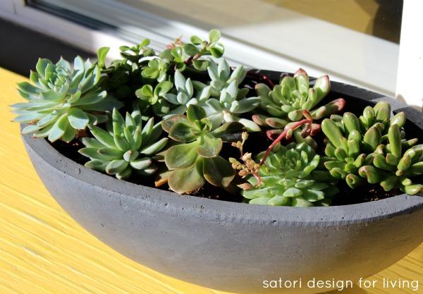 Succulents Planted in Grey Concrete Planter