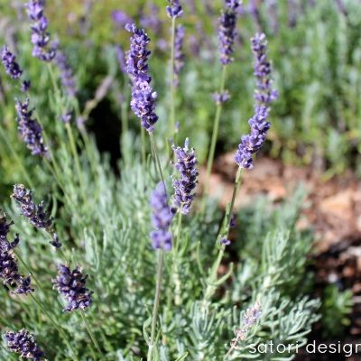 Lavender Garden - Lavender recipes and crafts
