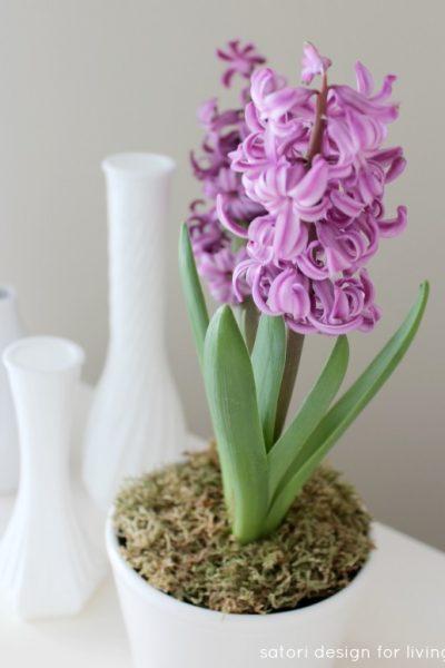 Potted Purple Hyacinth - Satori Design for Living