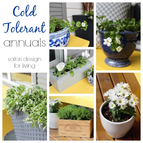 Cold Tolerant Annuals to Plant in Early Spring | Satori Design for Living