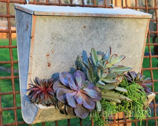 Vintage Mail Box Planter with Succulents - Urban Patina