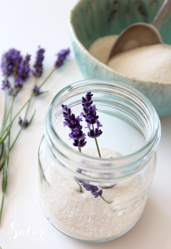 Fresh Lavender Sugar in GEM jar with Sprigs of Lavender
