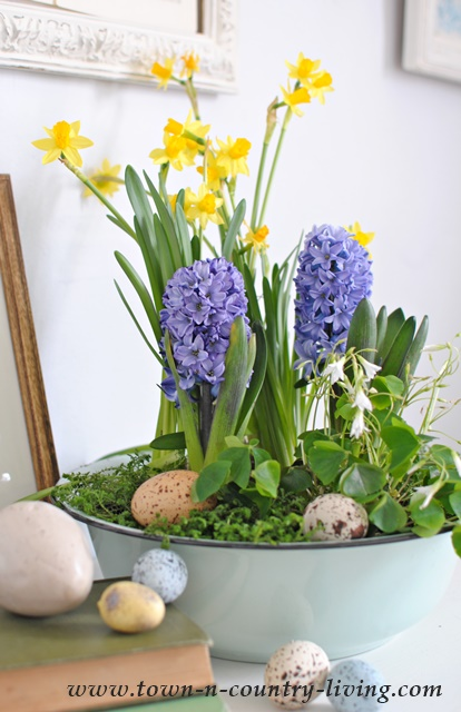 Spring Decorating Ideas- Bulbs Arrangement by Town and Country Living