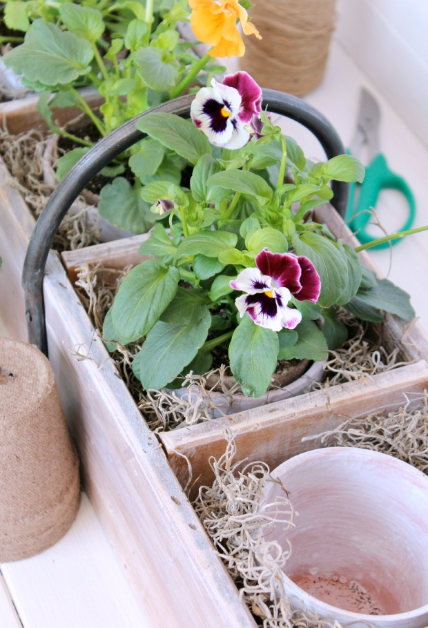 Vintage Tool Box Planter with Aged Terracotta Pots and Pansies - Trash to Treasure DIY Planter - Satori Design for Living