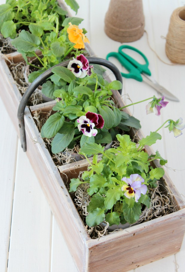 Vintage Tool Box Planter with Aged Terracotta Pots and Frizzle Sizzle Pansies - Satori Design for Living