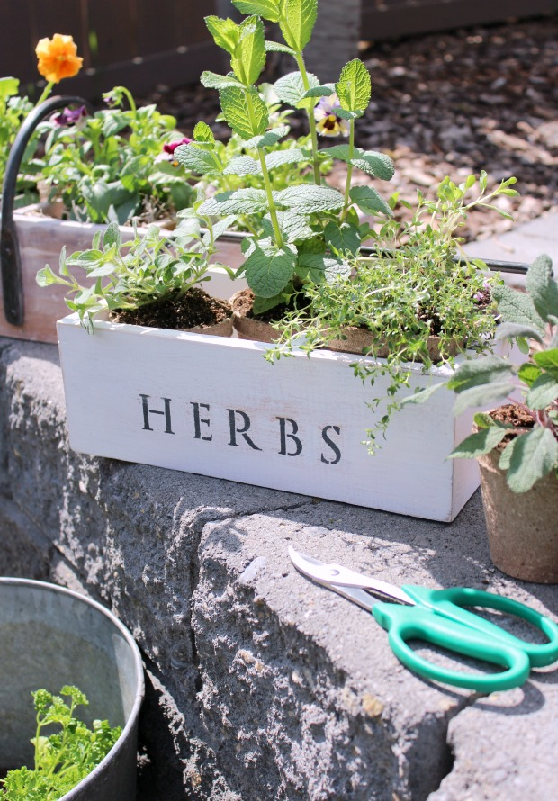Vintage Tool Box Herb Planter - How to Create a Spring Planter from an Old Tool Box - Satori Design for Living