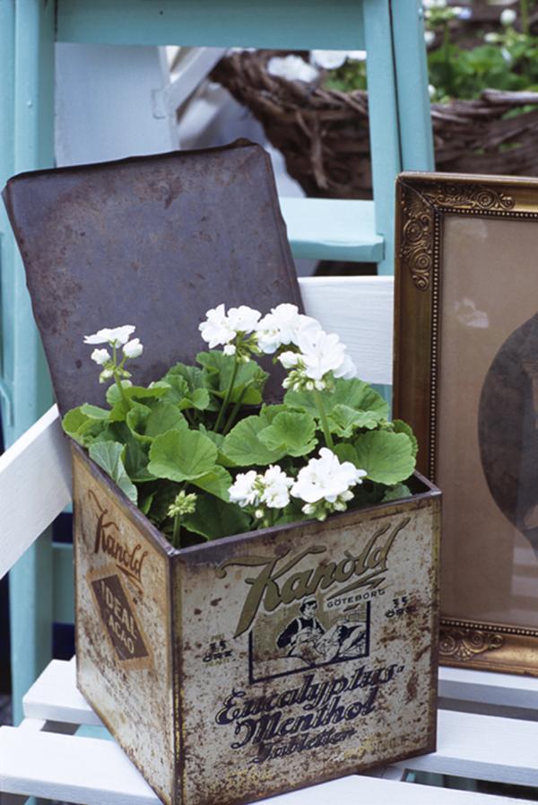 White Geraniums in Vintage Tin - Clemmensen & Brok