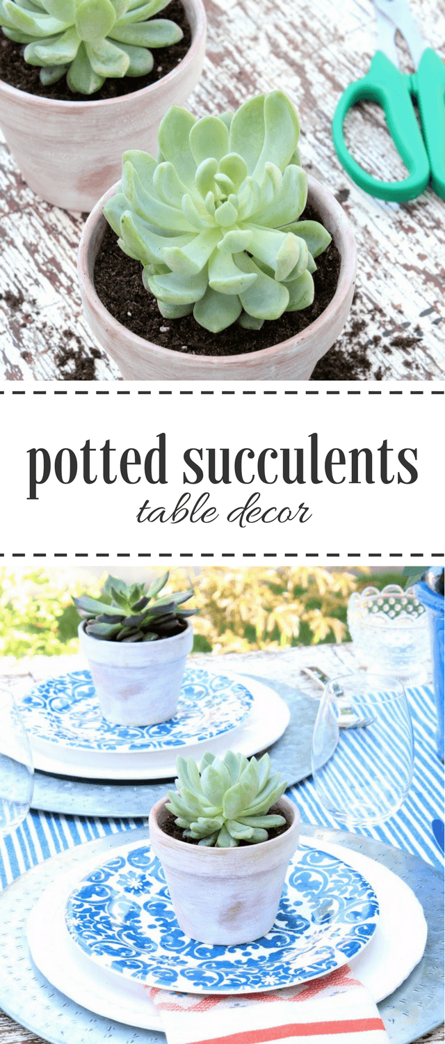 Mini Potted Succulents - Outdoor Table Decorating Ideas - Satori Design for Living