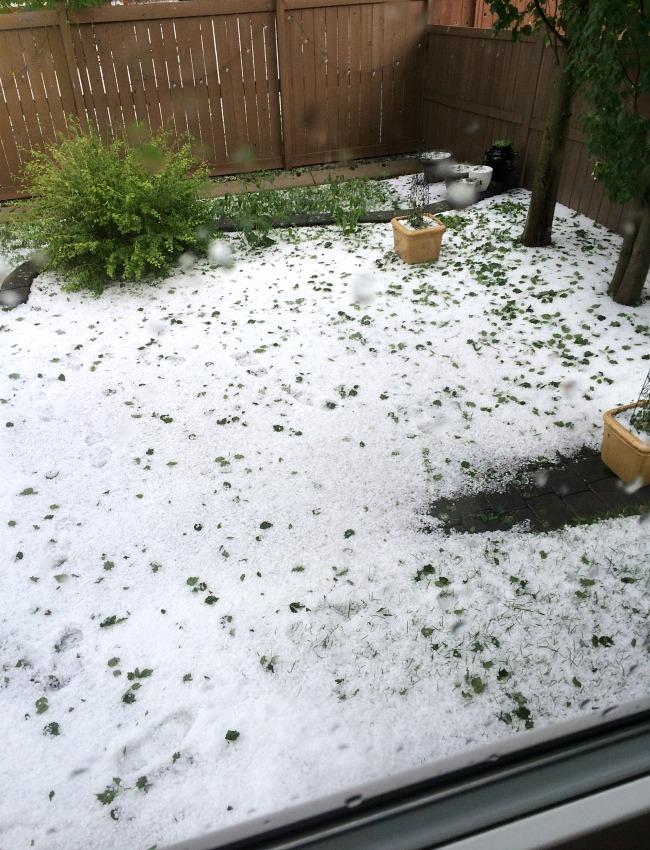 Backyard After Hail Storm