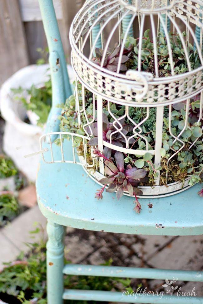 DIY Succulent Birdcage by Craftberry Bush