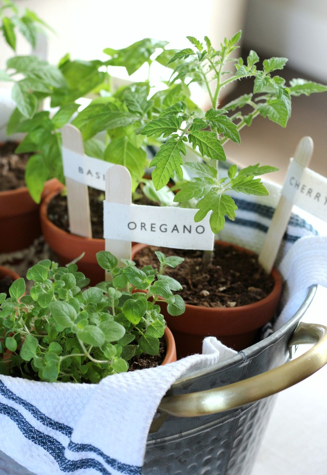 Herbs in Terracotta Pots with DIY Garden Markers - Gift Idea for the Gardener or Cook