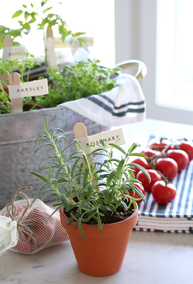 Potted Herbs with DIY Garden Markers - Grow Your Own Tomato Sauce - Gift Basket Idea
