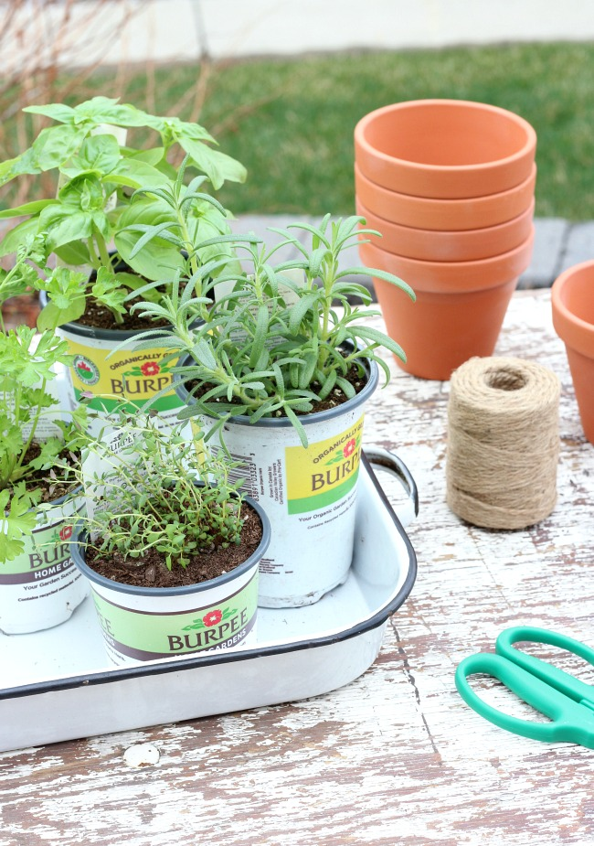 Supplies to Grow a Tomato Sauce Garden - Herbs and Tomato Plants