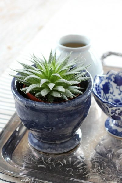 Succulent in Indigo Blue Stoneware Pot on Silver Tray