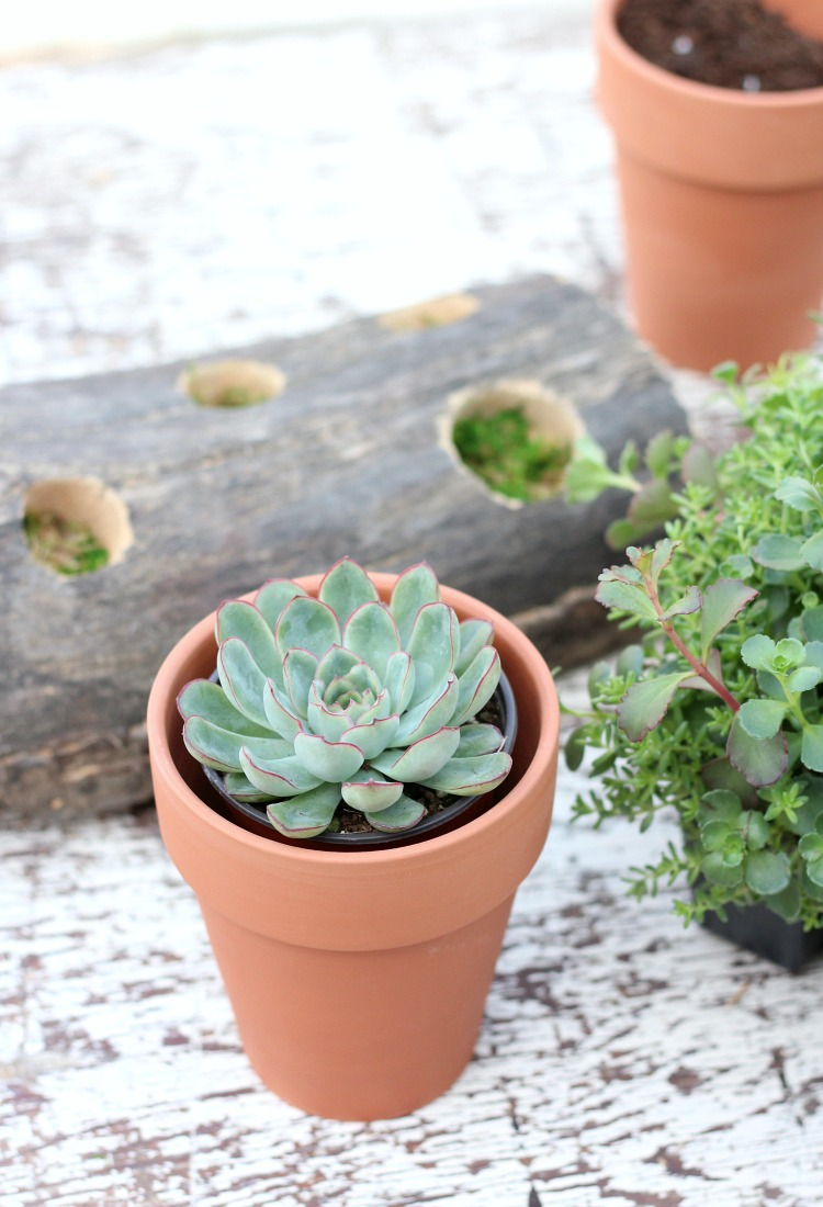 How to Make a Log Table Centerpiece with Succulents