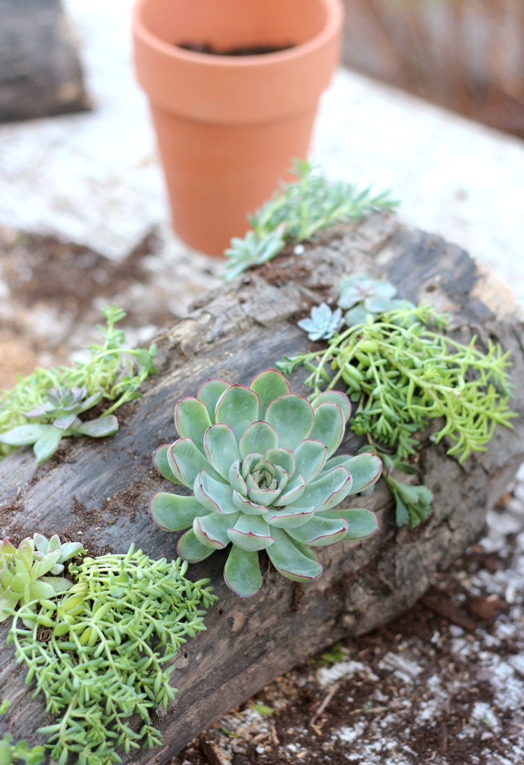 DIY Succulent Centerpiece for Your Outdoor Table