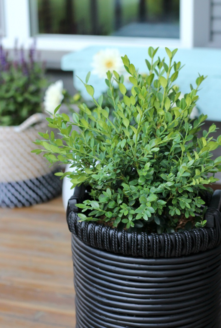 Flea Market Basket Planter with Boxwood - Front Porch Decorating Ideas