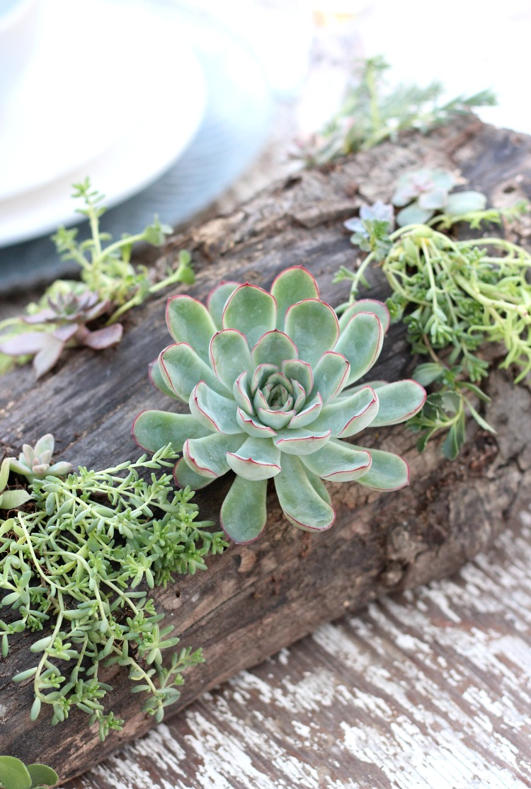 Rustic Log with Succulents
