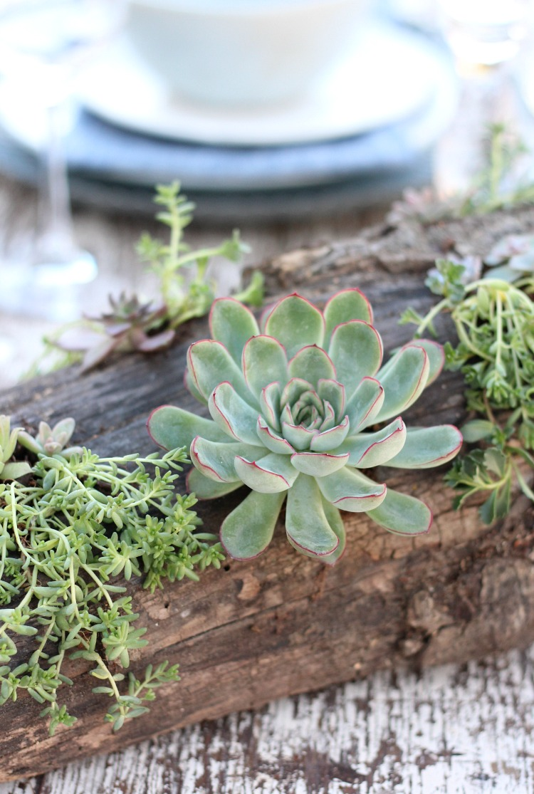 Log Table Centerpiece with Succulents