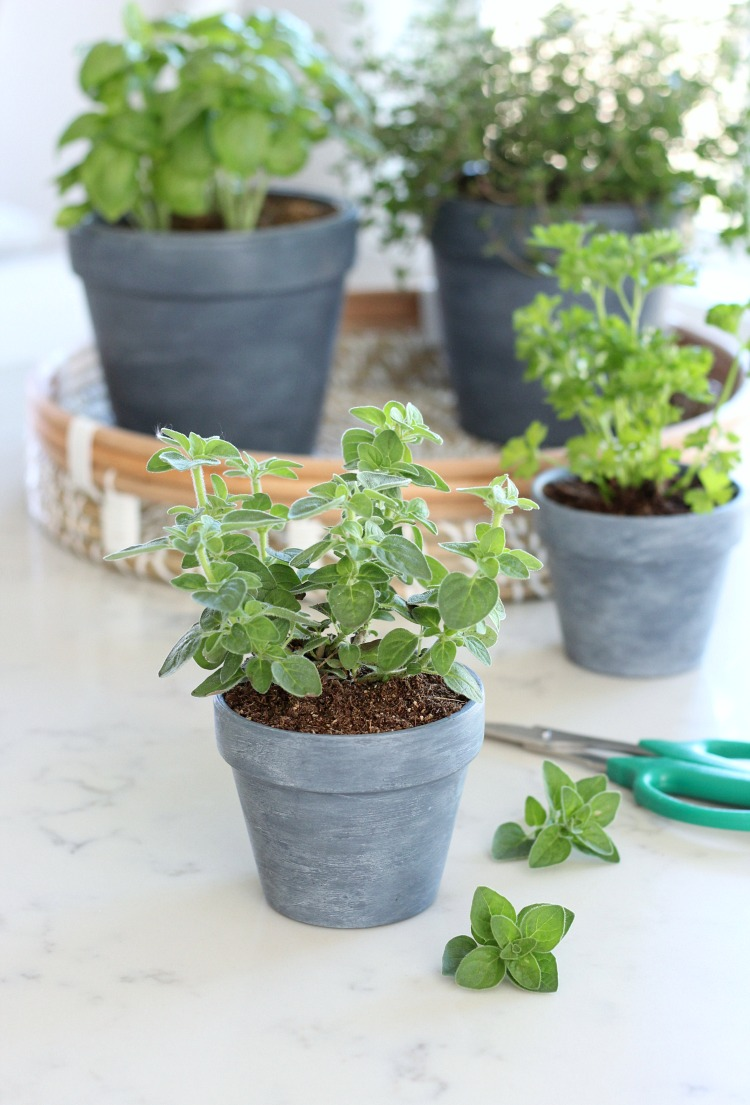 Concrete Painted Pots with Herbs - Satori Design for Living