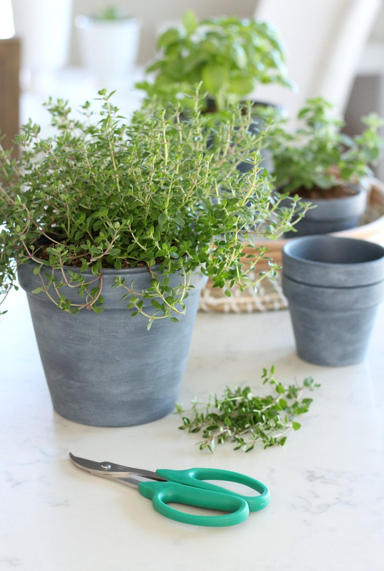 DIY Concrete Painted Pots with Herbs - Satori Design for Living