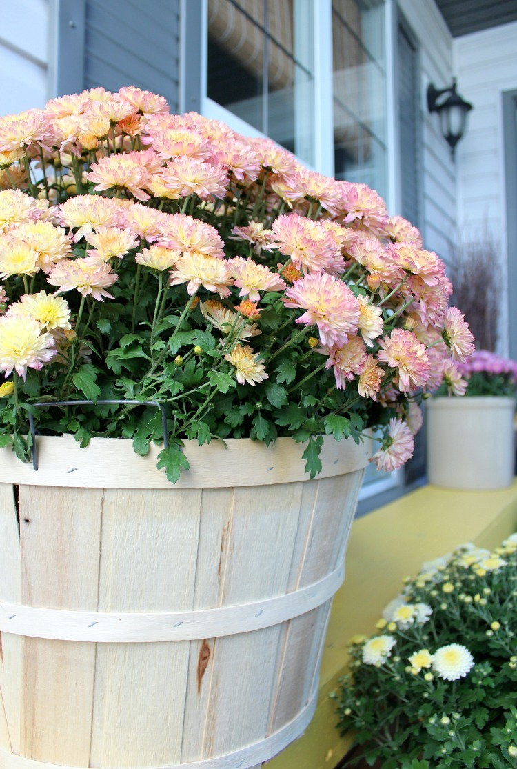 Apple Basket Planter with Garden Mums for Fall Front Porch
