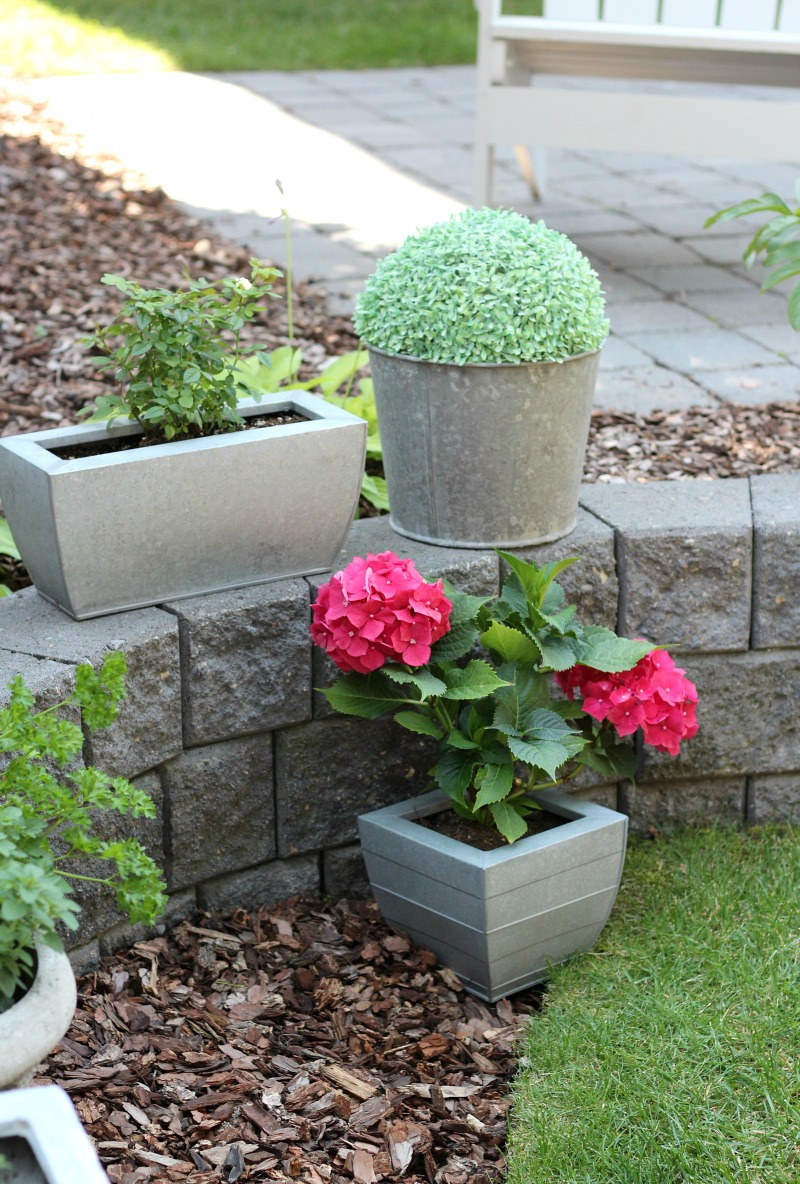 Galvanized Planters and Faux Boxwood Topiary in an Old Metal Sap Bucket