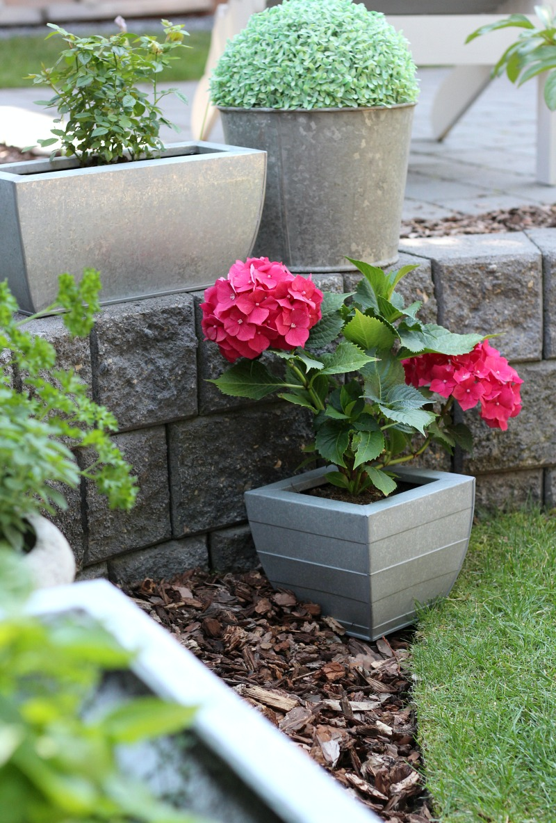 Galvanized Planters with Hydrangeas - Vintage Sap Bucket with Faux Boxwood Sphere