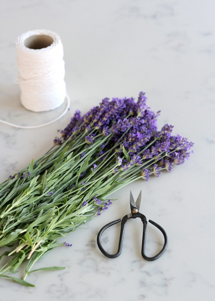 Bundle of English Lavender Sprigs with Black Scissors and String for Drying