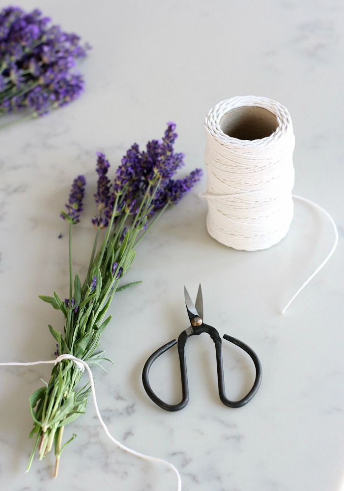 English Lavender Stalks in Bunch with String and Gardening Scissors for Drying