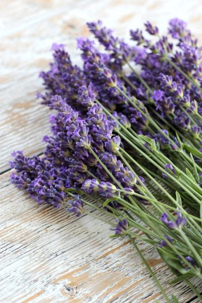 Sprigs of English Lavender Munstead