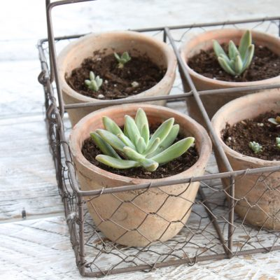 DIY Gardening Gifts - Robert and Stevens Potters Basket with Succulents