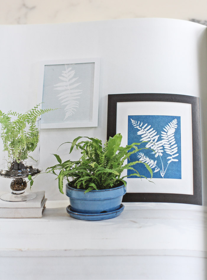 DIY Cyanotype Fern Art with Potted Fern and Terrarium