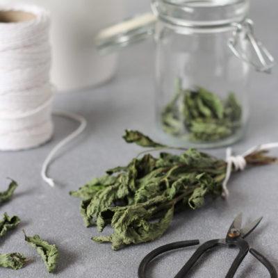 Dried Mint in Bundle and Loose Leaf Mint Tea in Glass Jar
