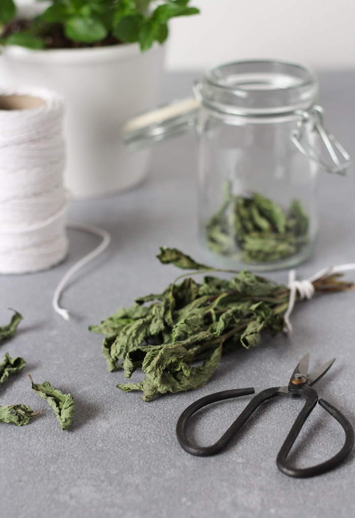 Dried Mint in Bundle and Loose Leaf Mint Tea in Glass Jar