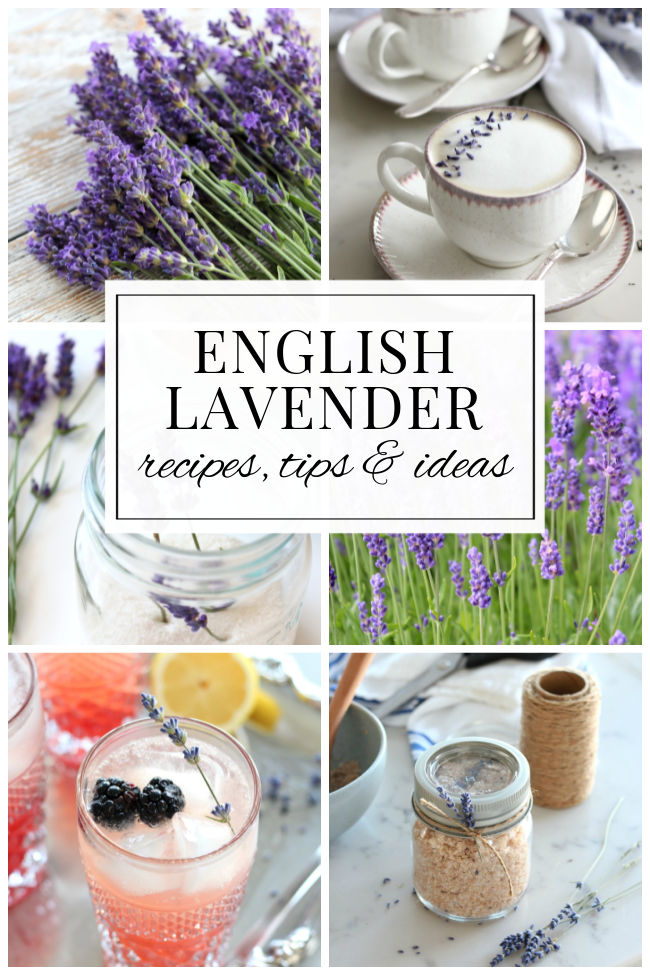 English Lavender Plants and Uses