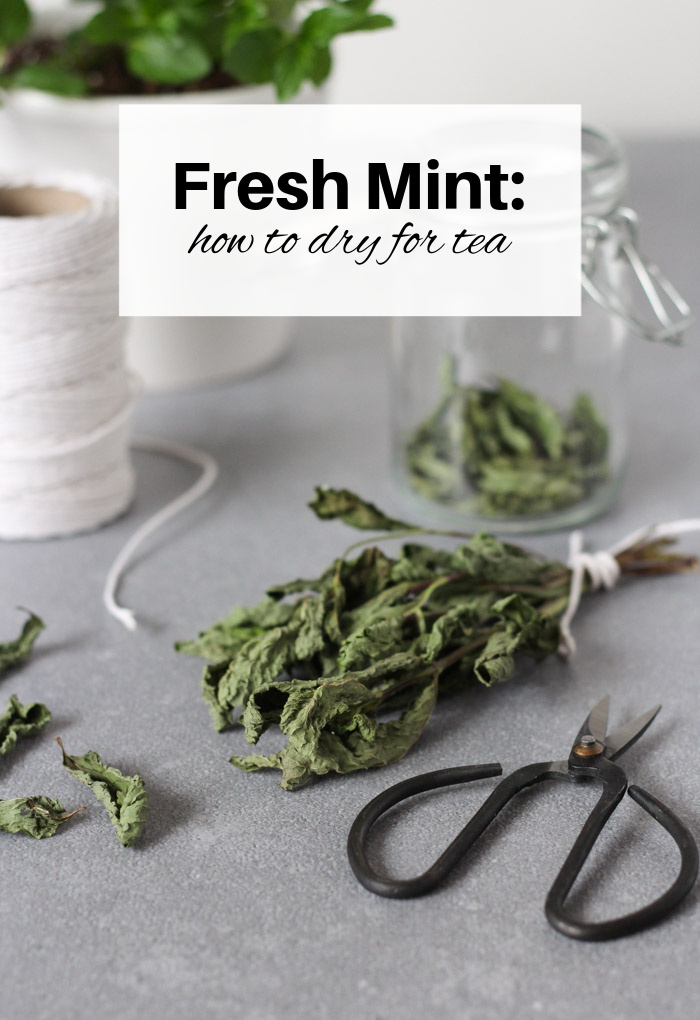 Dried Mint Leaves Tied in Bundle with Kitchen String