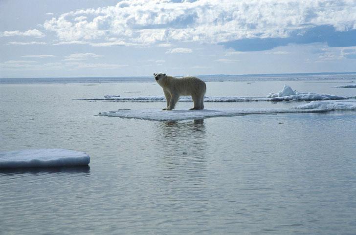 白熊の写真