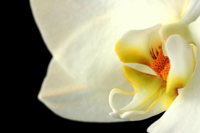 Wallpaper Foto Dan Gambar Bunga Cantik Untuk Laptop Satria Baja Hitam