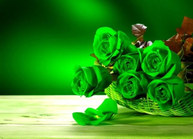 wallpaper gambar bunga mawar hijau