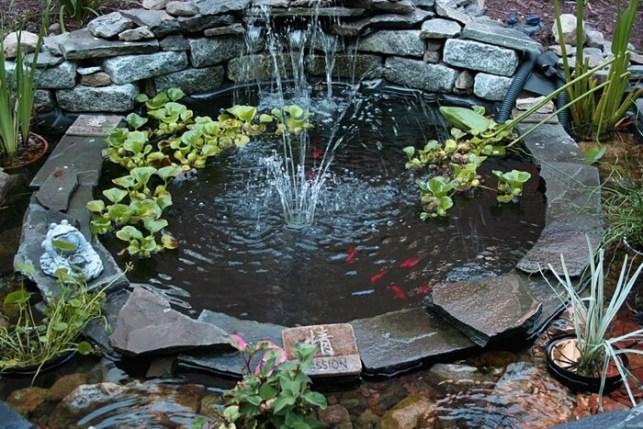 kolam ikan mini