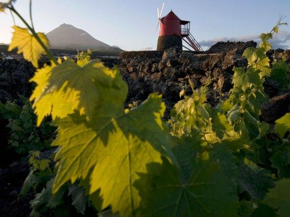 Vulkanische wijn azoren | Saudades de Portugal