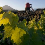 Vulkanische wijn van de Azoren