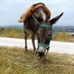 Op pad met een ezel