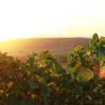 De wijnroute van de Alentejo