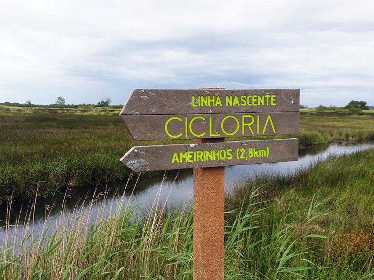 Fietsen: langs de Ria de Aveiro
