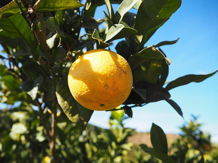 De smaken van de Algarve